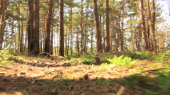 Animal run  POV in wood. Stabilized. - stock footage