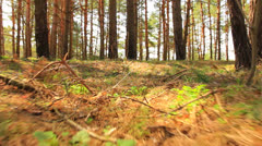 Animal run  POV in wood. Stabilized Stock Footage