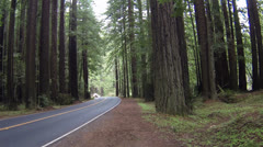 Vacation cars driving through California Redwood Forest HD 0202 Stock Footage