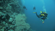 Stock Video Footage of divers swimming in the blue with big sea fan near