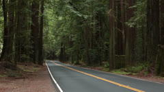 Vacation travel vehicles drive through California Redwood forest HD 5665 Stock Footage