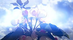 Spring Flowers with fresh cloud 7 Stock Footage