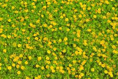 Small yellow flower - stock photo