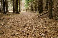 Cone covered path Stock Photos