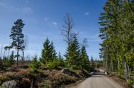 Dirt road in a nordic forest Stock Photos