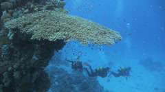 Divers swimming under neath the table coral Stock Footage