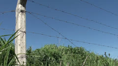 Barbed wire fence against grass and sky 3 Stock Footage