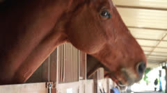 Brown Horse Standing in Stable at Equestrian Center Stock Footage