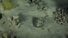 Cuttle fish at night Stock Footage