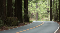 Redwood forest California car drives around corner HD 5662 Stock Footage