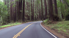 Redwood forest northern California driving right side of road HD 072 Stock Footage