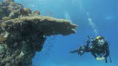 divers swimming near the reef - stock footage