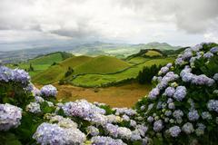 Azores landscape flowers Stock Photos