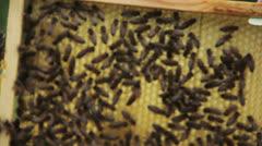 Queen bee Stock Footage