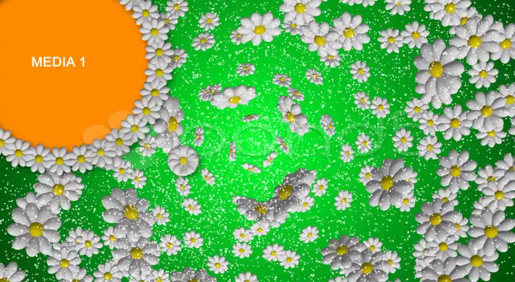 After Effects Project - Pond5 Flower color 9 placeholders 22726001