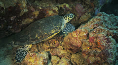 turtle chilling in an overhang - stock footage