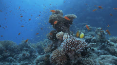Fish feeding at the reef Stock Footage