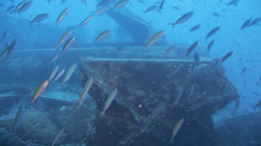 shoal of bait fish gethered on the wreck - stock footage