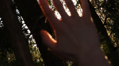 Sun rays through silhouetted hand/bushes.Rack focus in/out.Lens flares.1080p24. Stock Footage