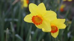 Springtime Stock Footage