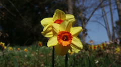 Spring greeting Stock Footage