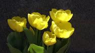 Yellow tulips Stock Footage