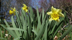 Gift of spring Stock Footage