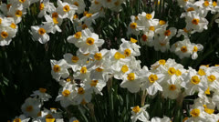 spring is here - stock footage