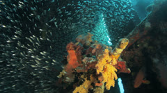 shoal of bait fish gethered in the wreck - stock footage