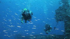divers behind shoal of bait fish gethered in the wreck - stock footage