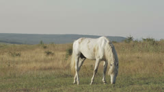 White horse Stock Footage