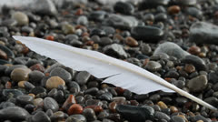 Long white feather lays dripping on rocky beach, gently washed up by waves. HD. Stock Footage