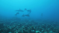 School of dolphin play in the water Stock Footage