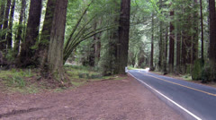 Redwood forest California car dive left side of road HD 082 Stock Footage