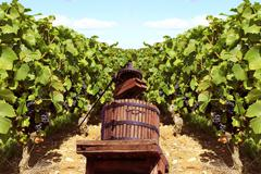 Vignes Stock Photos