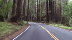 Redwood forest northern California driving left side of road HD 072 Stock Footage