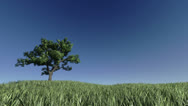 Stock Video Footage of Solitary Tree on Green Meadow against blue sky