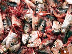 Decapitated sardines Stock Photos