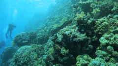 Free swimming moray eel with divers in the background Stock Footage
