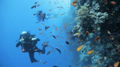 divers behind clouds of red anthias - stock footage
