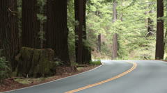 Summer vacation car drive towards redwood forest California HD 5663 - stock footage