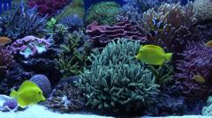 Tropical Aquarium Fish 01 Stock Footage