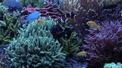 Tropical aquarium fish 02 - stock footage