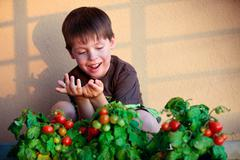 Cute little boy with homegrown cherry tomatoes Stock Photos