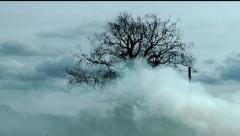 Forest Fire with Smoke Drifting Stock Footage
