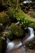 River with moss Stock Photos
