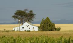 Farm House with Corn Field - stock photo