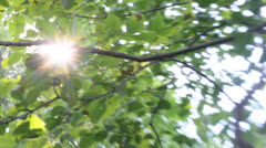 Lensbaby, sun peaks through autumn tree leaves. Tracking low-angle. 1080p 24fps. Stock Footage