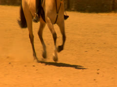 A horse running on sand at the sunny days Stock Footage