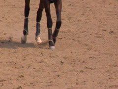 A jogging horse at equestrian center Stock Footage